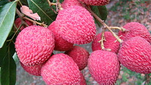 English: Lychee of Rajshahi, Bangladesh- a clo...