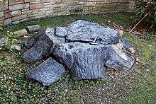 Carboniferous Wikipedia