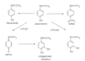 Métabolisme paracetamol.png