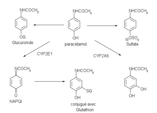 Paracétamol 500px-M%C3%A9tabolisme_paracetamol