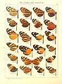 Macrolepidoptera15seit 0075.jpg