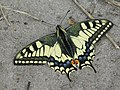 Magnificent butterfly.jpg