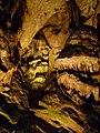 Magura cave-Пещера Магурата - panoramio (15).jpg