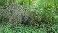 Maina Am südlichen Ortsrand stillgelegter Friedhof.jpg