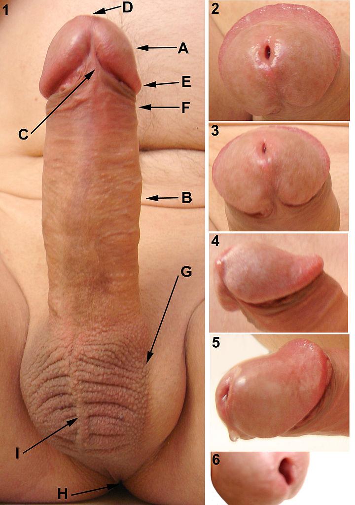 голый пенис фото