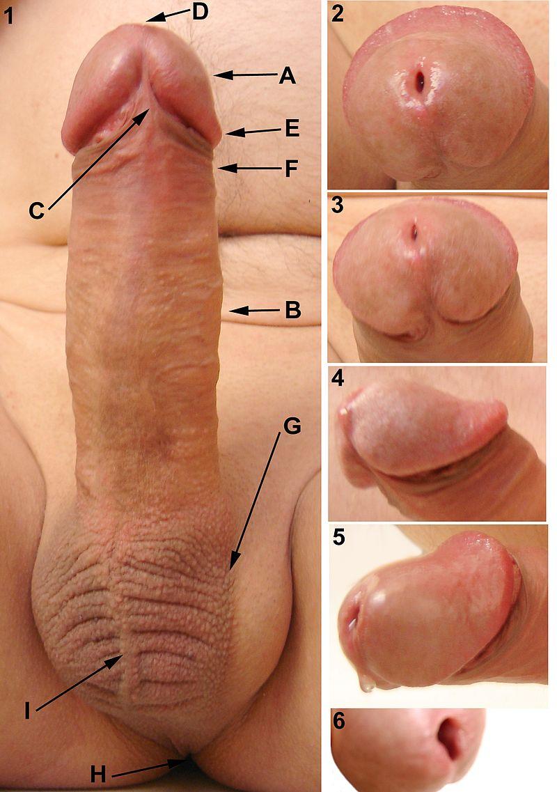 oralsex hiv ansteckung