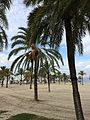 Mallorca (22126403898).jpg