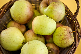 Bellflower apple - Yellow Belleflower.