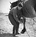 Man met een paard in het Joodse werkdorp in de Wieringermeer, Bestanddeelnr 254-4921.jpg