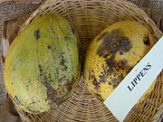 Mango Lippens Asit fs8.jpg