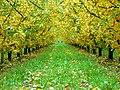 Manzanos en otoño - panoramio.jpg