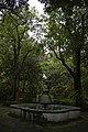 Marco de árboles.jpg