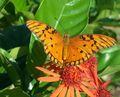 Mariposa en Flor.JPG