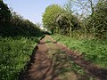 Marystow Footpath 10 - geograph.org.uk - 431134.jpg