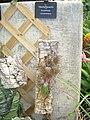 Matthaei Botanical Gardens - IMG 8999.JPG