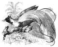 Menniskans härledning och könsurvalet illustration sida II-54.png