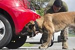Military Working Dog Training 161025-M-MJ974-030.jpg