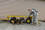 Military working dog and handler practice explosives detection 140729-A-BD610-005.jpg