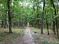 Milovice - forest.jpg