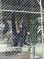 Monkey Paramaribo zoo.JPG