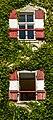 Moosburg Schloss Westwand Weinranken mit Fenster 29082017 5442.jpg
