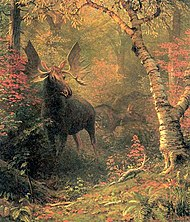Moose in a Forest Glen oil c.1885 Albert Bierstadt.jpg