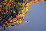 Moose in the Kobuk River (20774752518).jpg