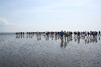 English: Morecambe Bay Walk Crossing from Arns...
