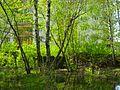 Morkovkino Swamp.jpg