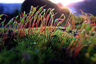 Moss - macro photography.jpg