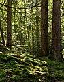 Moss on slope into Gullmarsskogen ravine 1.jpg