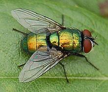 flyの意味 使い方 英和辞典 weblio辞書