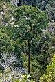 Mount-Silam Lahad-Datu Sabah Flora-of-Mount-Silam-03.jpg