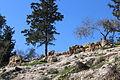 Mount Eitan IMG 2666.JPG