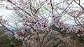 Mount Yoshino in 2014-4-19 No,14.JPG