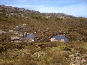 Mount Barrow - Tarns on the alpine plateau at Mount Barrow