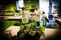 Muchołówka amerykańska w laboratorium biologicznym, Centrum Nauki Kopernik, fot. Robert Kowalewski.jpg