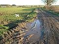 Muddy Track - geograph.org.uk - 327109.jpg