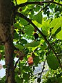 Mulberry 3.jpg