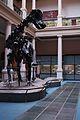 Museo de La Plata - Diplodocus carnegii.jpg