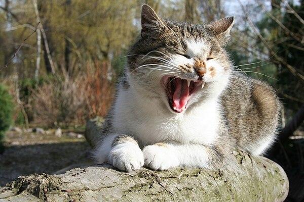 My cat - at home - Sieraków.jpg