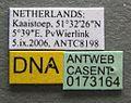 Myrmica ruginodis casent0173164 label 1.jpg
