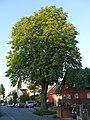 ND Wallstraße 11 DSC01735.jpg