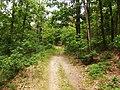 NP Podyjí, lesní cesta u Popic (1).jpg