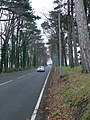 Nant Hall Road, Prestatyn - geograph.org.uk - 656719.jpg