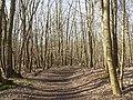 Nationaal Park Kennemerland (41370495041).jpg