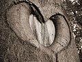 Nature heart.jpg