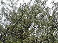 Nature in Smolensk - 44.jpg
