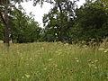 Naturschutzgebiet Kuhschellenrasen Wirt am Berg.jpg