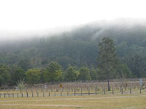 New South Wales wine - A vineyard in the Hunter Valley.